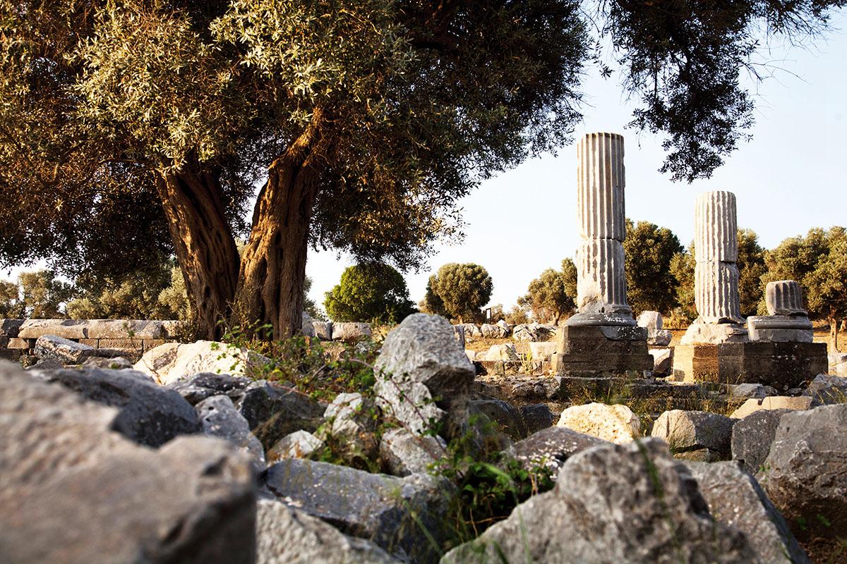 Teos / Seferihisar - İzmir