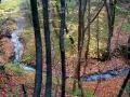 Belgrad Ormanı'na Sadakat - Sayı 248