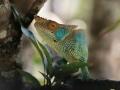 Günün Karesi Madagaskar'dan