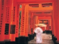 Günün Karesi Kyoto'dan
