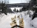 Günün Karesi İsveç'ten