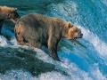 Günün Karesi Alaska'dan