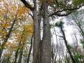 Belgrad Ormanı Direniyor - Sayı 259