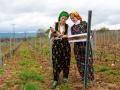 Kırklareli'den Gelibolu'ya, Trakya Bağ Rotası - Sayı 2014