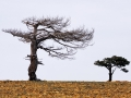 Ölümsüz Ağaçlar - Sayı 270