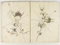Piri Reis Ve Haritası - Sayı 240