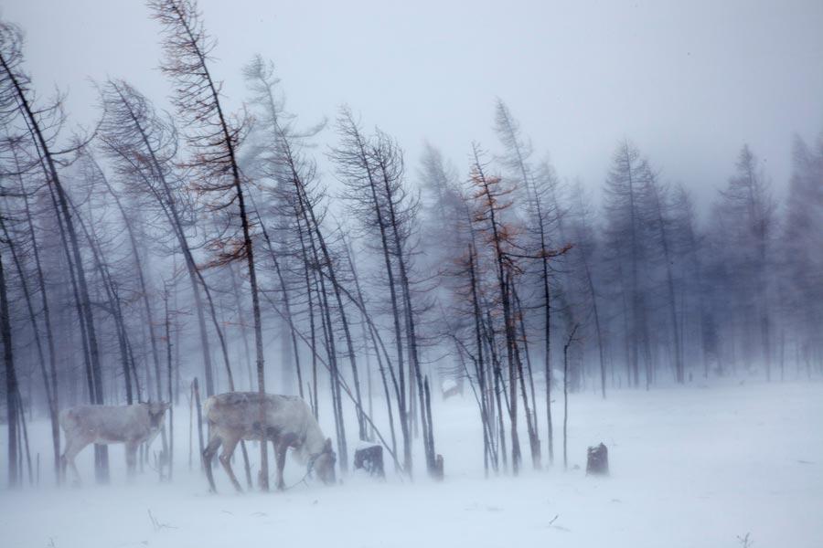 Taygada  Kış Masalları - Sayı 248Taygada  Kış Masalları