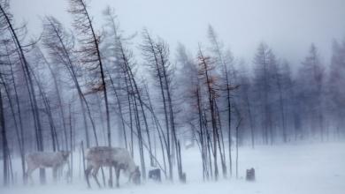 Taygada  Kış Masalları - Sayı 248