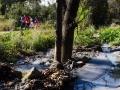 Validebağ'a Sadakat, Kentteki Doğa - Sayı 261