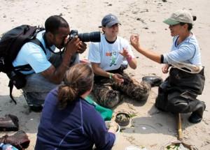 Uzmanlar belirli tarihlerde bir araya gelerek New York'un Gateway Ulusal Parkı'nda deniz kıyısındaki kumul alanlarda örnekleme yapıyorlar. Bulunan eklembacaklılar (böcek, kırkayak, yengeç vb.) merkeze götürülmeden önce inceliyor. Fotoğraf: ABD Ulusal Park Servisi