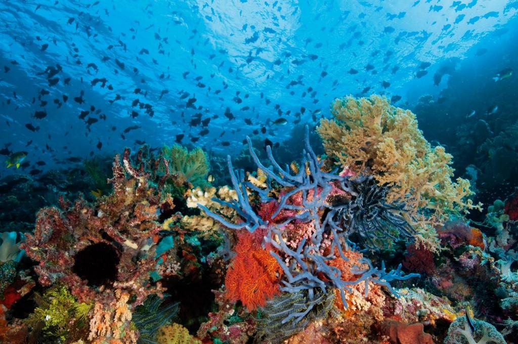 Endonezya, Mercan Gezegeni