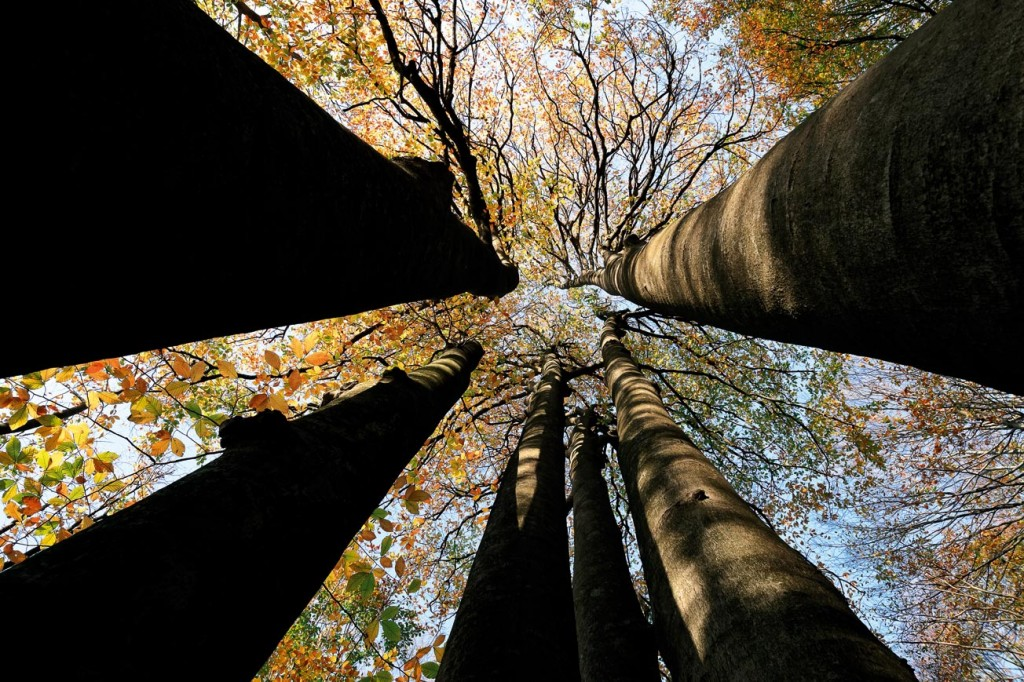 İstanbul, Belgrad Ormanı Direniyor