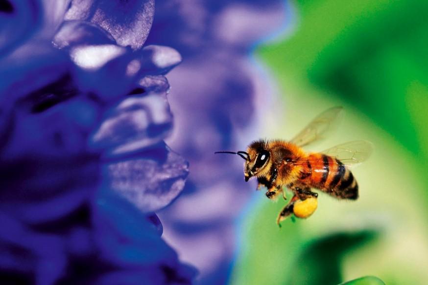 Arıların  Trafik İşaretleri