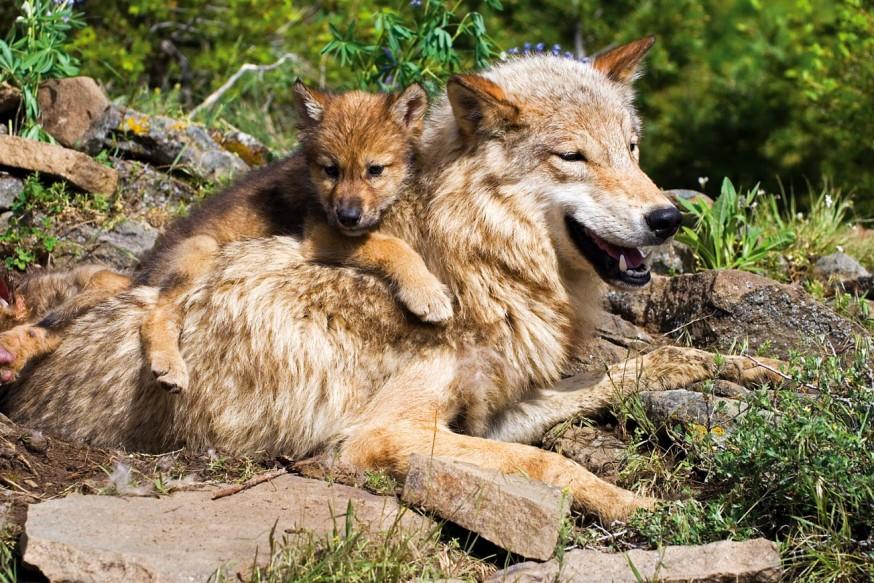 Merhametli Hayvanlar