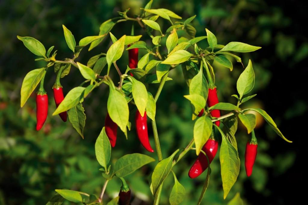 Bitkiler de Duyar