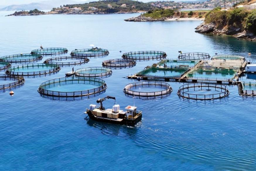 Balık Çiftlikleri Balığın Yükselişi