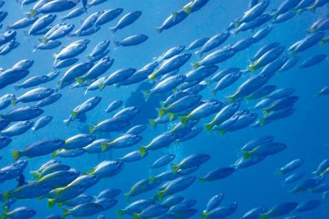 Balıklar Nasıl Anlar?