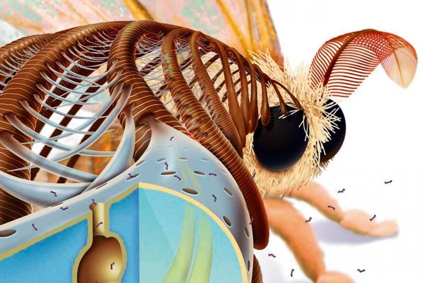 Güvedeki Nanoteknoloji
