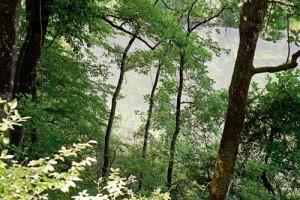 Belgrad Ormanı, sadece tarihi ve mimari eserlere değil, zengin bir doğal çeşitliliğe kucak açıyor. Orman yaklaşık 400 bitki, 169 kuş, 56 kelebek ve yüzlerce mantar türü ile birçok memeli hayvan, sürüngen ve amfibiye ev sahipliği yapıyor. Kayın, gürgen, kestane, kızılağaç, titrekkavak, ıhlamur, akçaağaç, karaağaç, karaçam, sarıçam, fıstıkçamı, sahil çamı, dişbudak, ladin, sedir ve meşe ağaç türlerinden sadece bazıları. Kirazlıbent Göleti çevresini sapsız meşe ağaçları kuşatıyor.