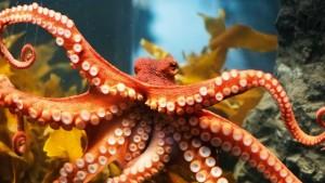 259ATyer_Octopus01   Atlas  