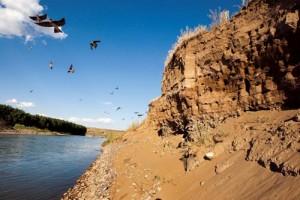 Kum Apartmanlar  Kum kırlangıçları (Riparia riparia) ilkbaharda büyük koloniler halinde Dicle Nehri'nin kenarında, kum duvarlarındaki yuvalara yerleşiyor. Yaklaşık altı ay burada konaklayan kum kırlangıçları iki kez ürüyor. Avrasya ve Amerika'da yaşayan 12 santimetre uzunluğundaki kum kırlangıcı, ev kırlangıcına benziyorsa da üst bölümleri siyah değil, çok koyu boz kahverengi oluşuyla ayrılır. İnsan yerleşimlerinden uzak duran bu sevimli kuşları, ilkbahardan itibaren yaz boyunca Türkiye'nin her yerinde; açık arazide, özellikle su yakınlarında görebilirsiniz.