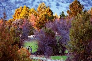 Avlanan Kutsallık Ankara ilinin kuzeybatısında, çayırların ve ormanların birbirine karıştığı alanlar uzanıyor. Yöre sakinlerinin geçmişten beri kutsal saydıkları kızıl geyikler (Cervus elaphus) bu tür alanlarda yaşamağı tercih ediyor. Aşırı avlanma nedeniyle Anadolu'da sayıları iyice düşmüş bulunan kızıl geyiklerin çoğalması ve korunması için çeşitli çalışmalar yapılıyor.