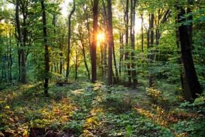 Belgrad'ın Sevinci Ağaçlar, pek çok canlıya sundukları çeşit çeşit yaşam ortamlarıyla Belgrad Ormanı'nın da belkemiğini oluşturur. Her biri tek başına büyük bir ekolojik değere sahiptir. Onların kıymetini en iyi ormanda yaşayan diğer çalılar, otsu bitki örtüsü, hayvanlar ve mikroorganizmalar bilir. Bu ağaçlar yüzyıllar boyunca çetin doğa koşullarında canlılara sahip çıkarak koruyup kollamıştır. Belgrad Ormanı yaklaşık 400 bitkiye ev sahipliği yapar; bunların 15'i ise endemiktir. Sonbaharda renkli bir şölenle veda edip kış uykusuna çekilen Belgrad, baharla uyanıp parlak yeşil elbiselerini giymeye başlar. Bu olay, ormandaki tüm diğer canlıları tarifsiz sevince boğar.