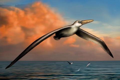 Fosilbilim: Yeni Dev Kuşumuz