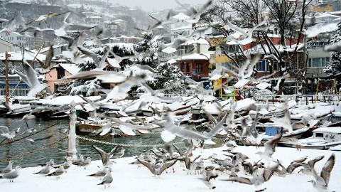 İstanbul'un Biyoçeşitliliği: Doğal Sesler