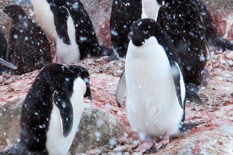 Antarktika: Beyaz Kıtada Keşif