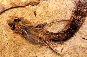 263ATyer_fosil | Atlas |