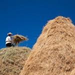 Günün Karesi Çağlayık'tan Kırklareli'nin Bulgaristan sınırına yakın köylerinden Çağlayık'ta, harman…