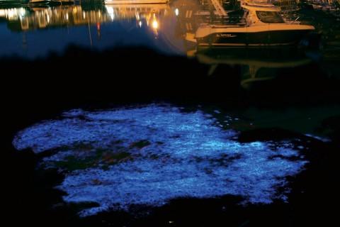 Denizlerin Işıklı Sakinleri