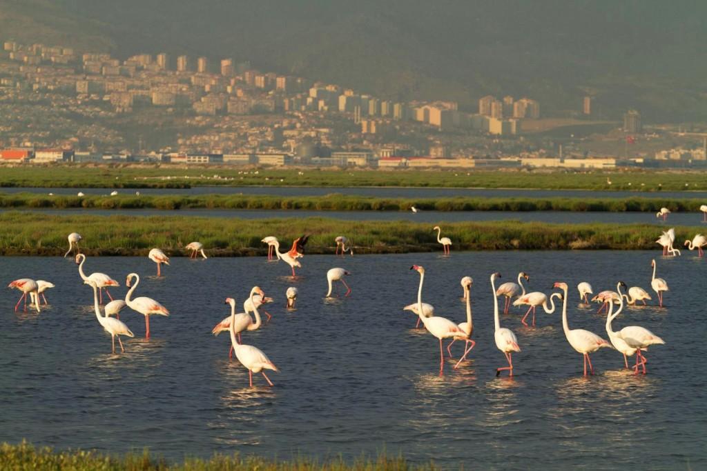Flamingolar Çamura Gömülmesin