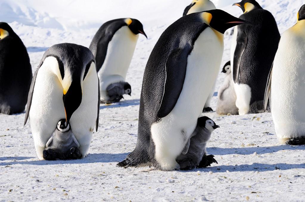 Buzun İmparatorları