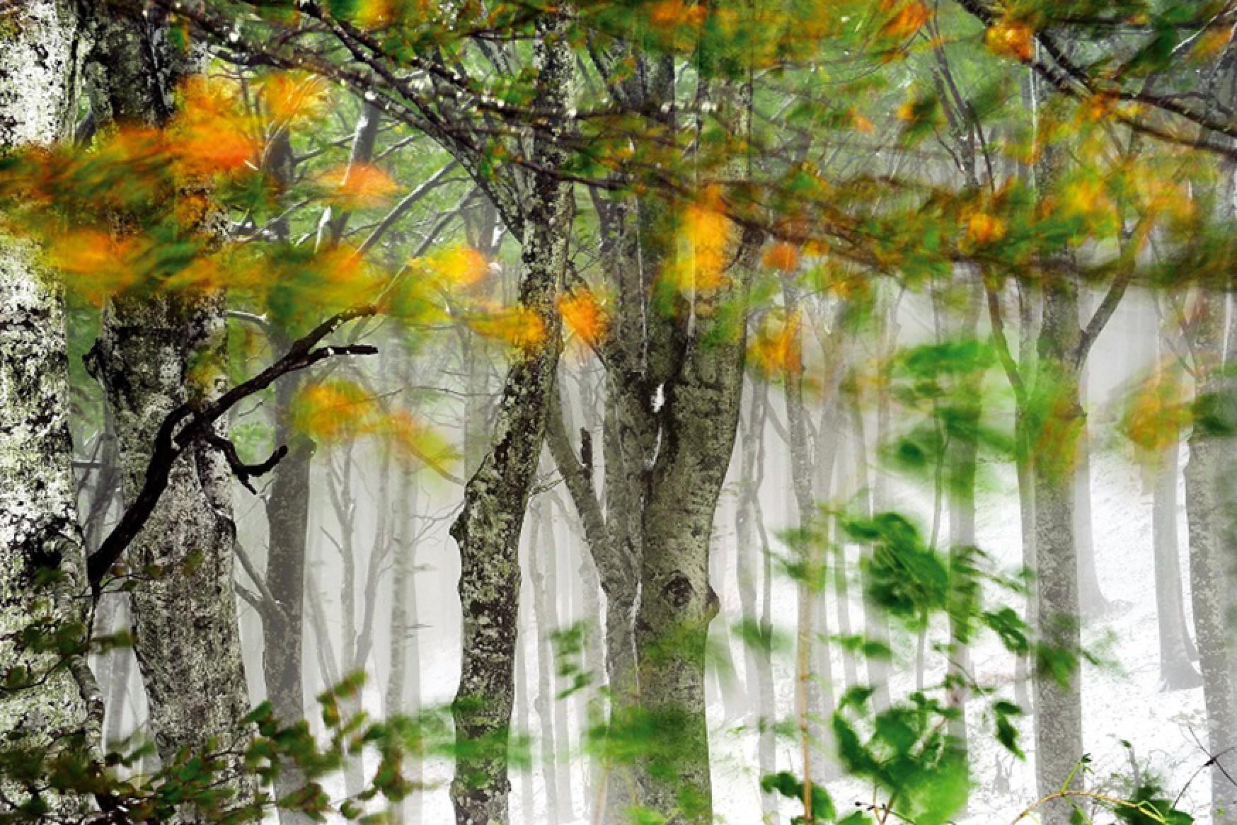 ıstranca ormanları ile ilgili görsel sonucu