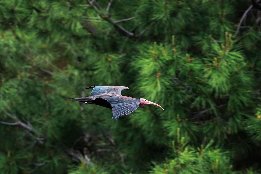 Kelaynak Kuşları; Fırat'ın Kutsal Kanatları