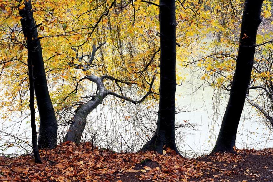 Belgrad Ormanı; Kentteki Vaha