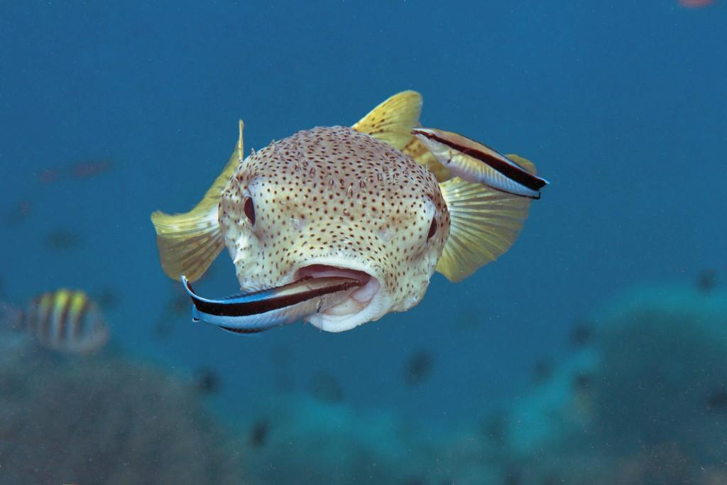Çevren; Şaşırtan Balıklar