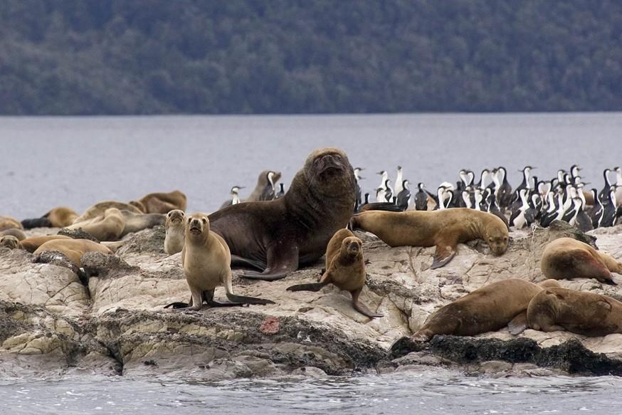 Doğal Yaşam; Okyanus Alarmı