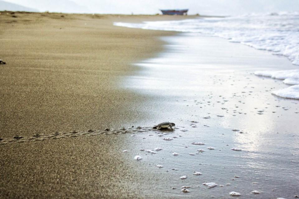 Yeşil Denizkaplumbağaları; Yaşam Ustaları