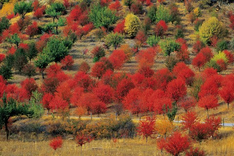 Sonbaharın En Güzel Fotoğraf Noktaları
