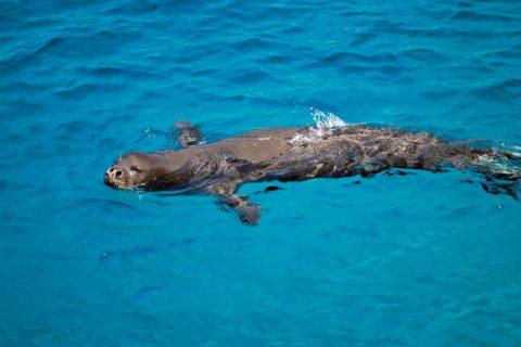 Akdeniz Fokları Son Sığınaklarında