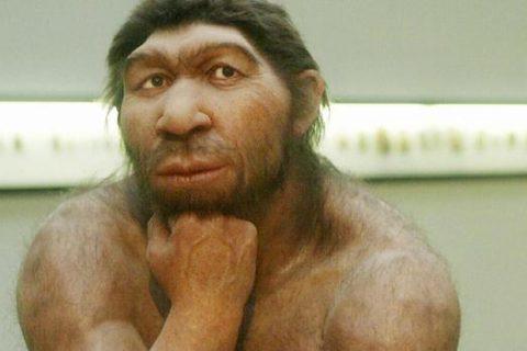 Alerjilerin Sorumlusu Neanderthaller