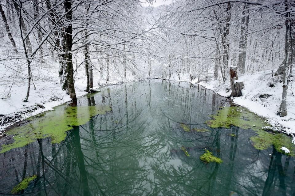 Orman ve su varlıkları için harekete geçme vakti