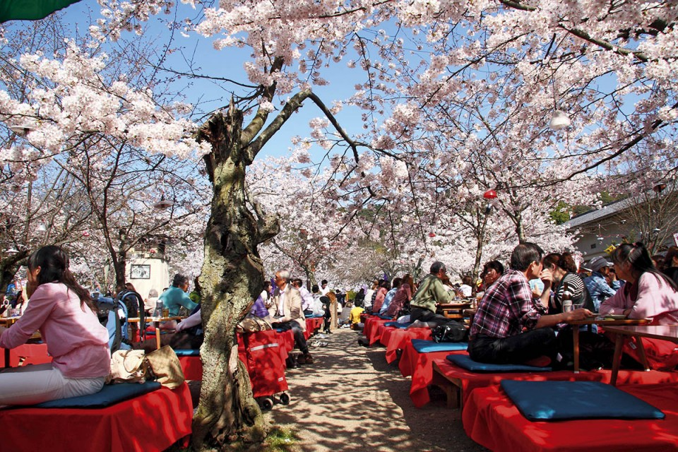 Japonya'da Bahar