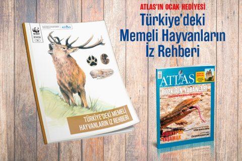 ATLAS'TAN HEDİYE