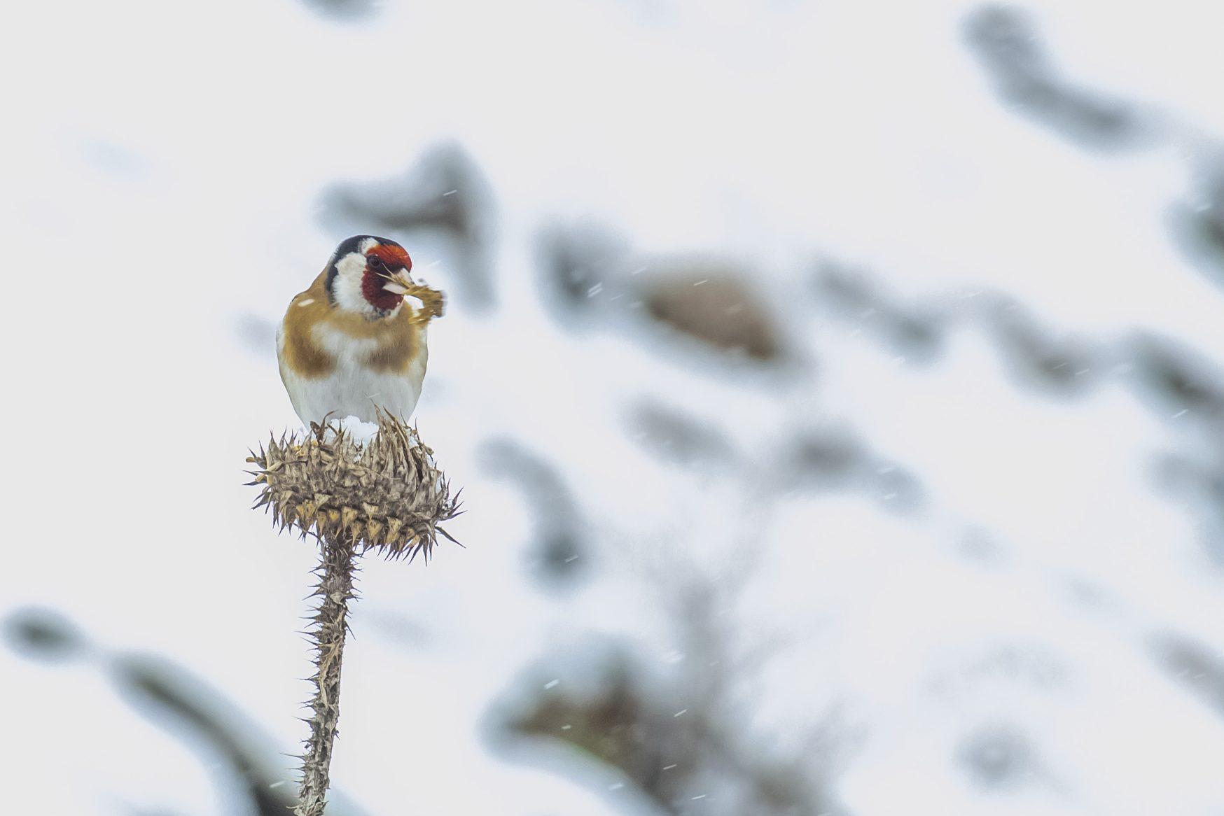 Kuşların Kışla Mücadelesi