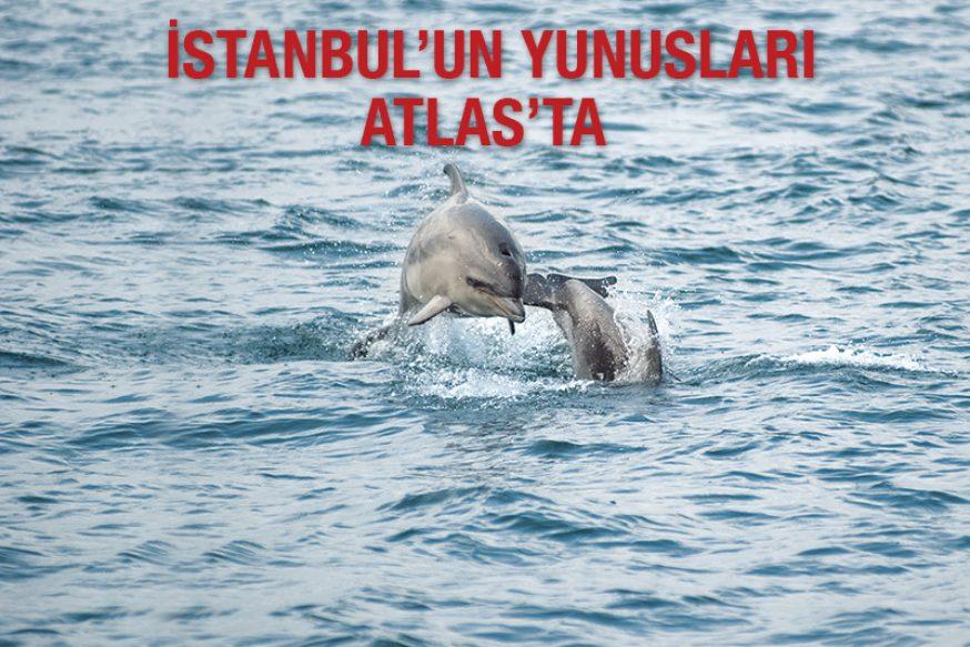 İstanbul'un Yunusları Atlas'ta