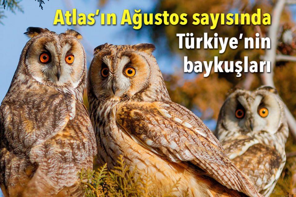 Atlas'ın Ağustos sayısında: Türkiye'nin baykuşları